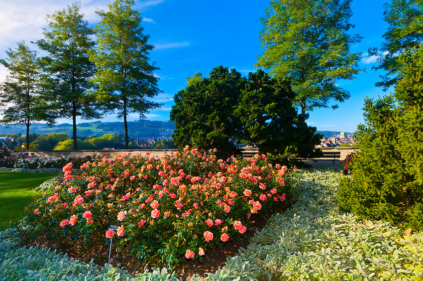 The Rose Garden (Rosengarten), Bern, Canton Bern, Switzerland