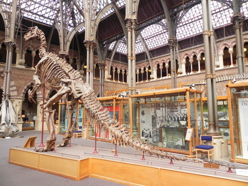 Oxford-Museum-of-Natural-History-Igunadon-skeleton