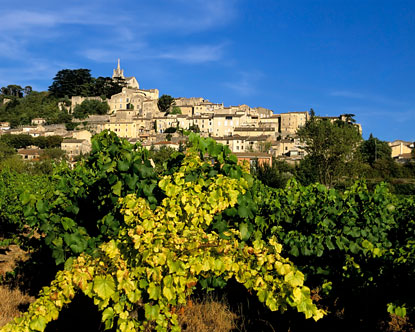 Provence-Vineyards