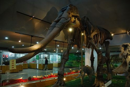 beijing-museum-of-natural-history1