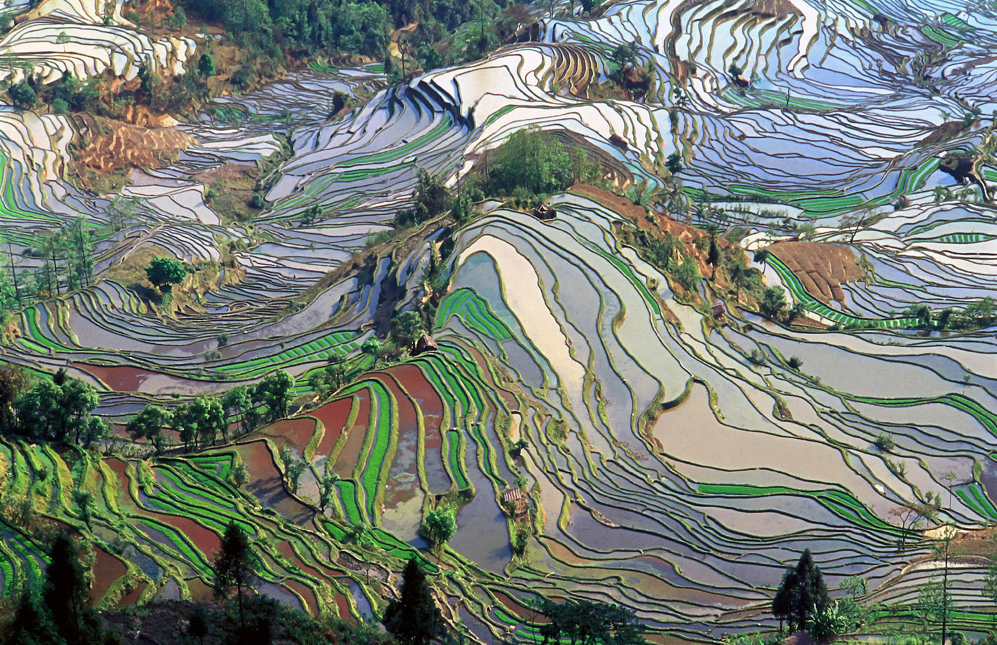 Terrace_field_yunnan_china_denoised
