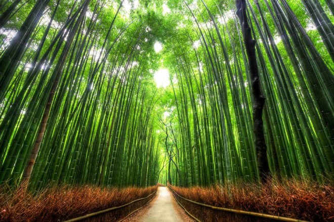 beautiful-trees-bamboo.preview